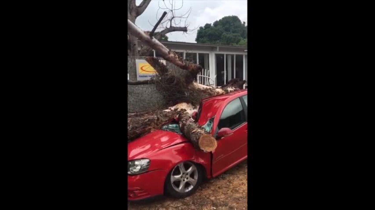 Árvore cai e destrói carro na Zona Leste de Teresina; veja vídeo