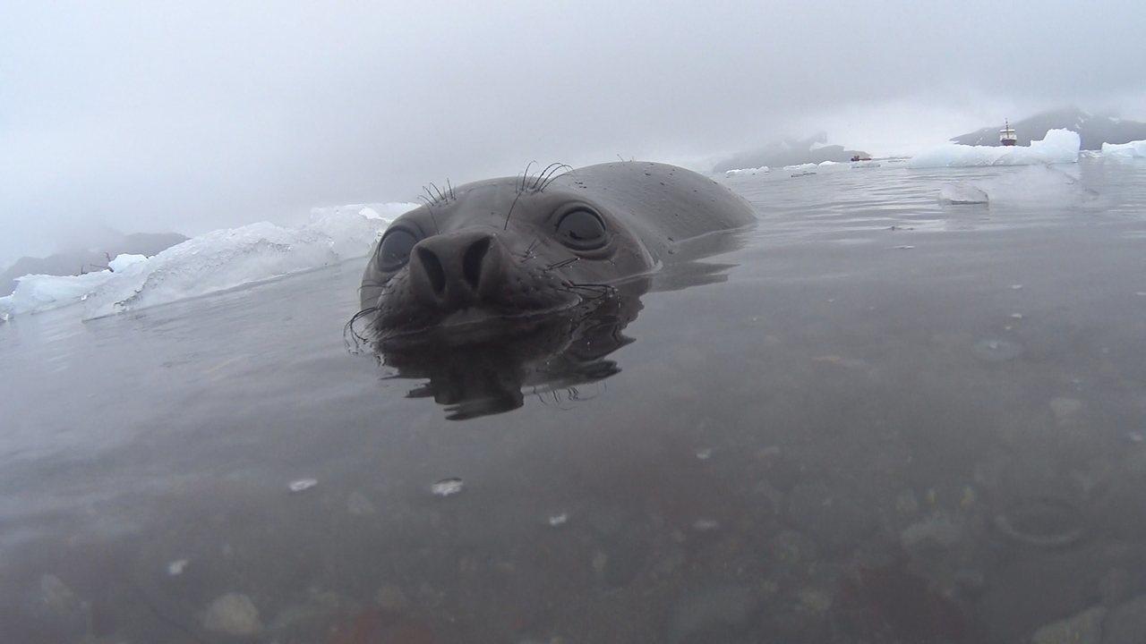 Confira o terceiro episódio da expedição de pesquisadores de SC à Antártida