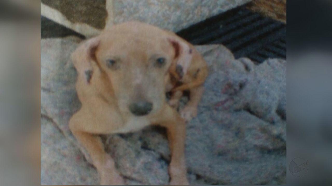 MP de Rio Claro investiga denúncia que cão com leishmaniose está escondido em residência
