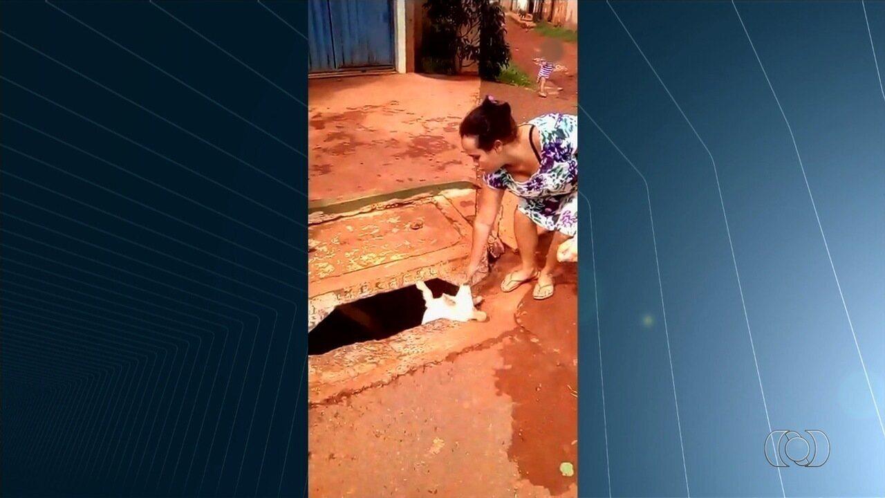 Mulher joga cachorro em bueiro em Goiás e causa revolta