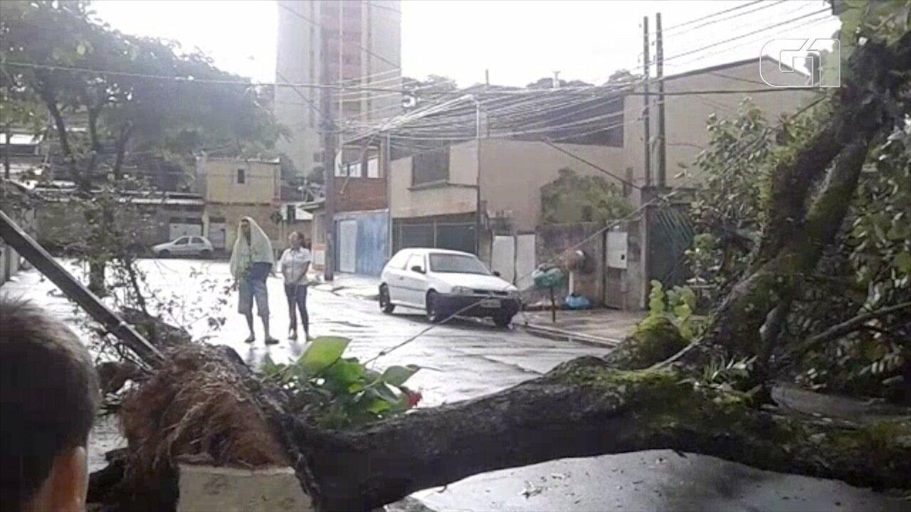 Chuva provoca queda de árvores em São José dos Campos