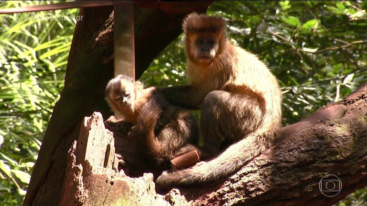 Macacos estão sendo mortos por causa da febre amarela