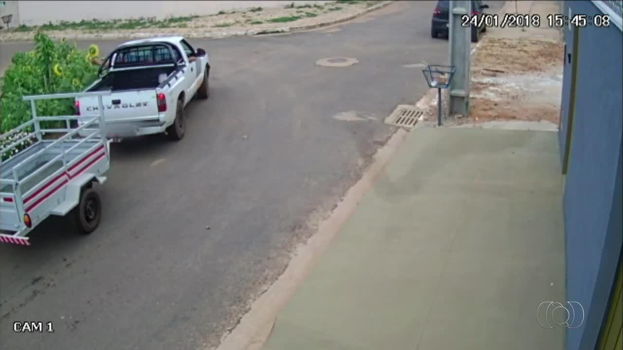 Câmera de segurança flagra momento em que homem tenta arrancar pés de girassóis