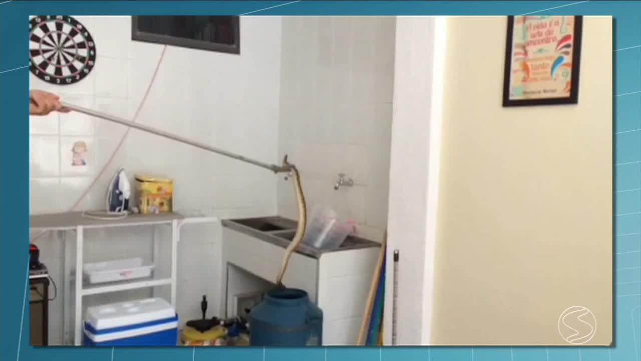 Morador de Resende encontra cobra na pia de casa