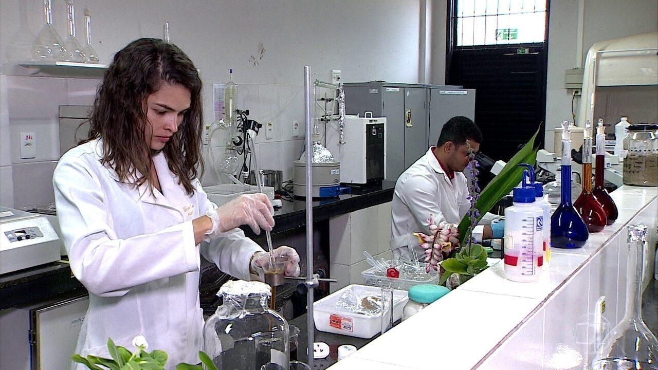 Flores já fazem parte de tratamentos em postos de saúde de Sergipe