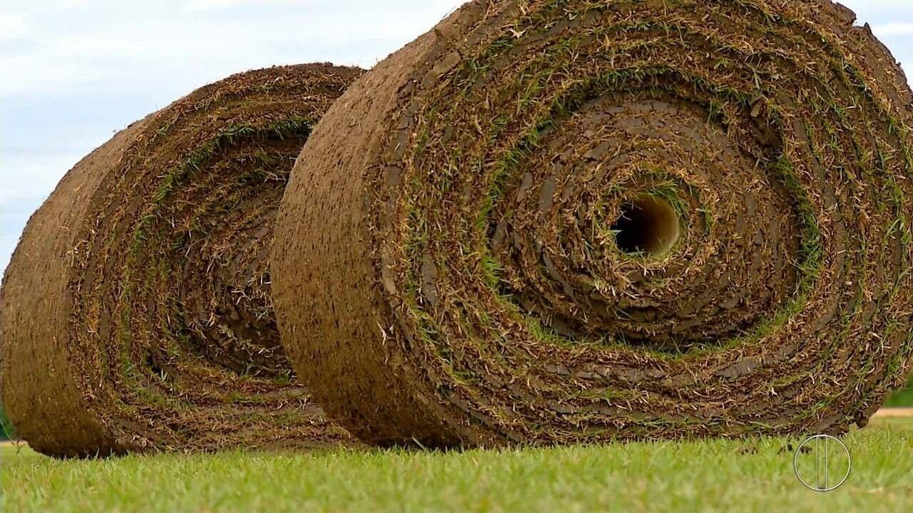 Saiba como foi cultivada a grama implatada no estádio Maracanã