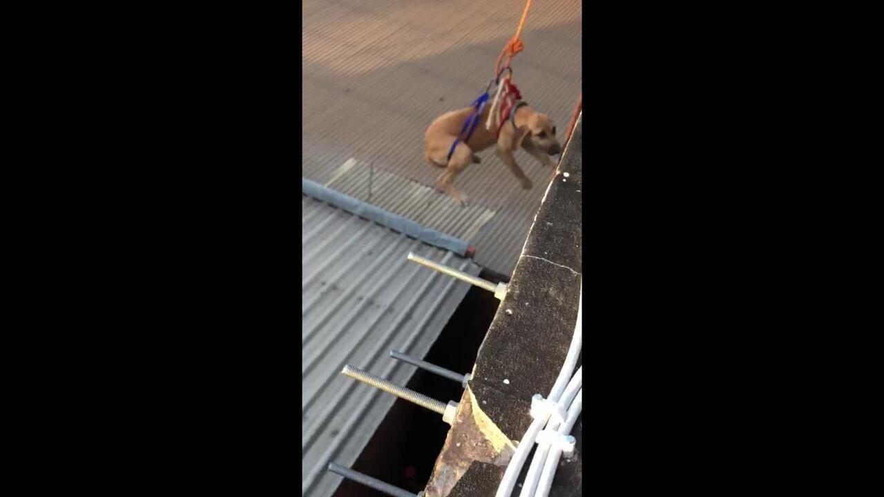 Cadela cai de prédio com mais de 14 metros e é resgatada por bombeiros em Rio Branco