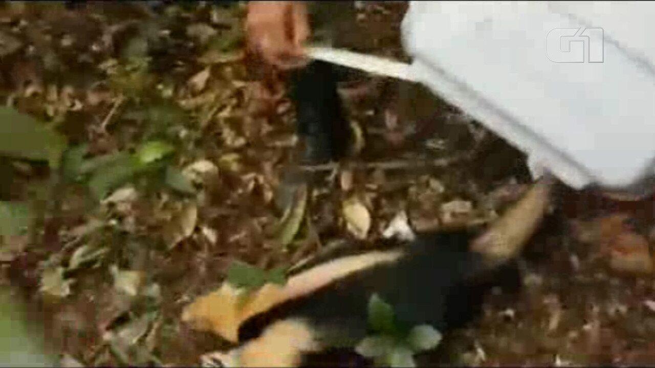 Tamanduá amarrado em poste é resgatado por policiais da DPMA