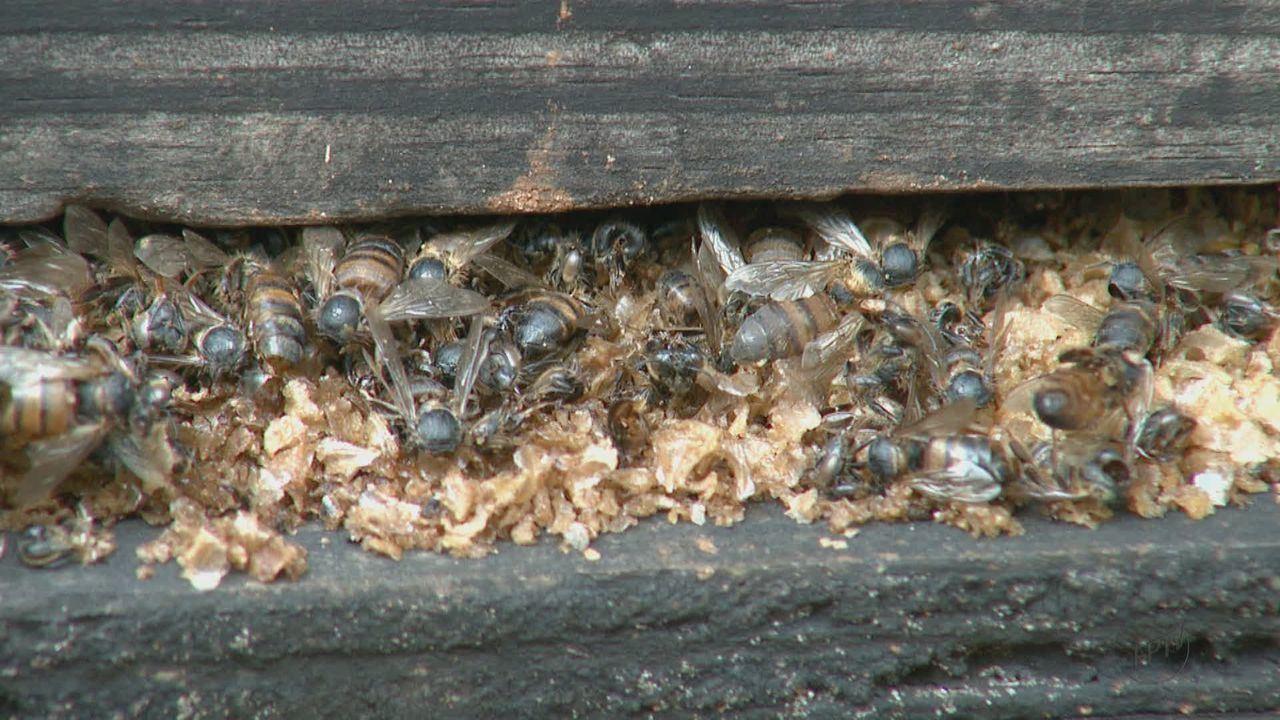 Morte de abelhas e furto de colmeias preocupam apicultores da região