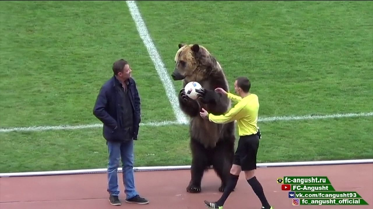 Urso entrega a bola para árbitro em jogo da terceira divisão do futebol da Rússia
