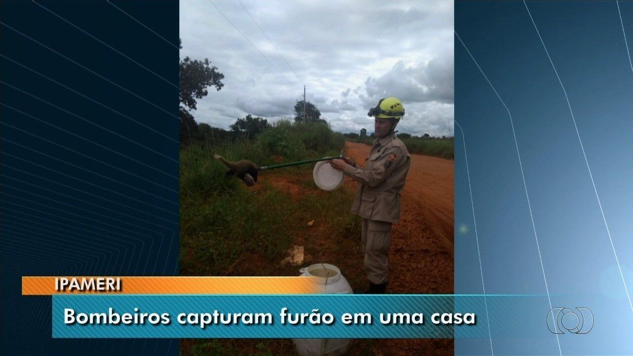 Bombeiros resgatam furão em Ipameri