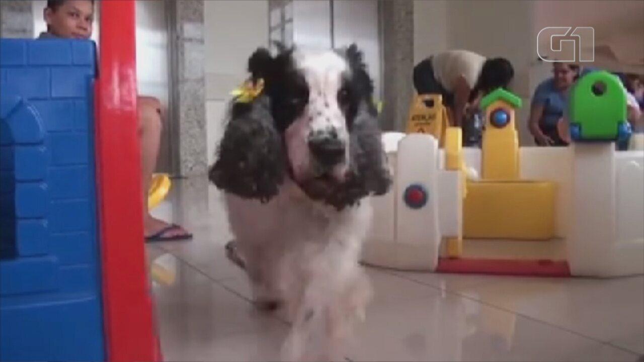 Cães voluntários levam carinho e alegria para pacientes em entidades de Rio Preto