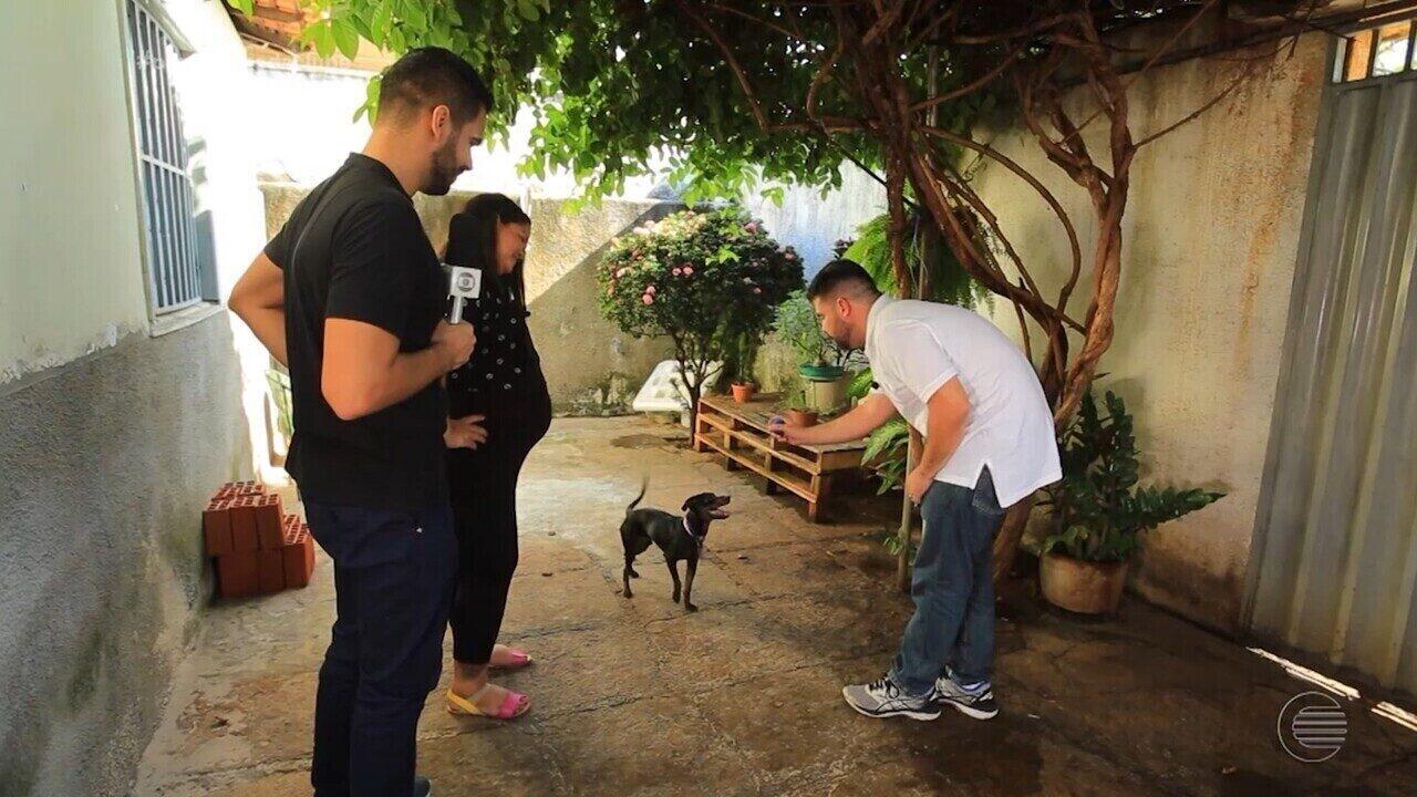 Especialista em comportamento animal ensina como deixar seu cão mais educado