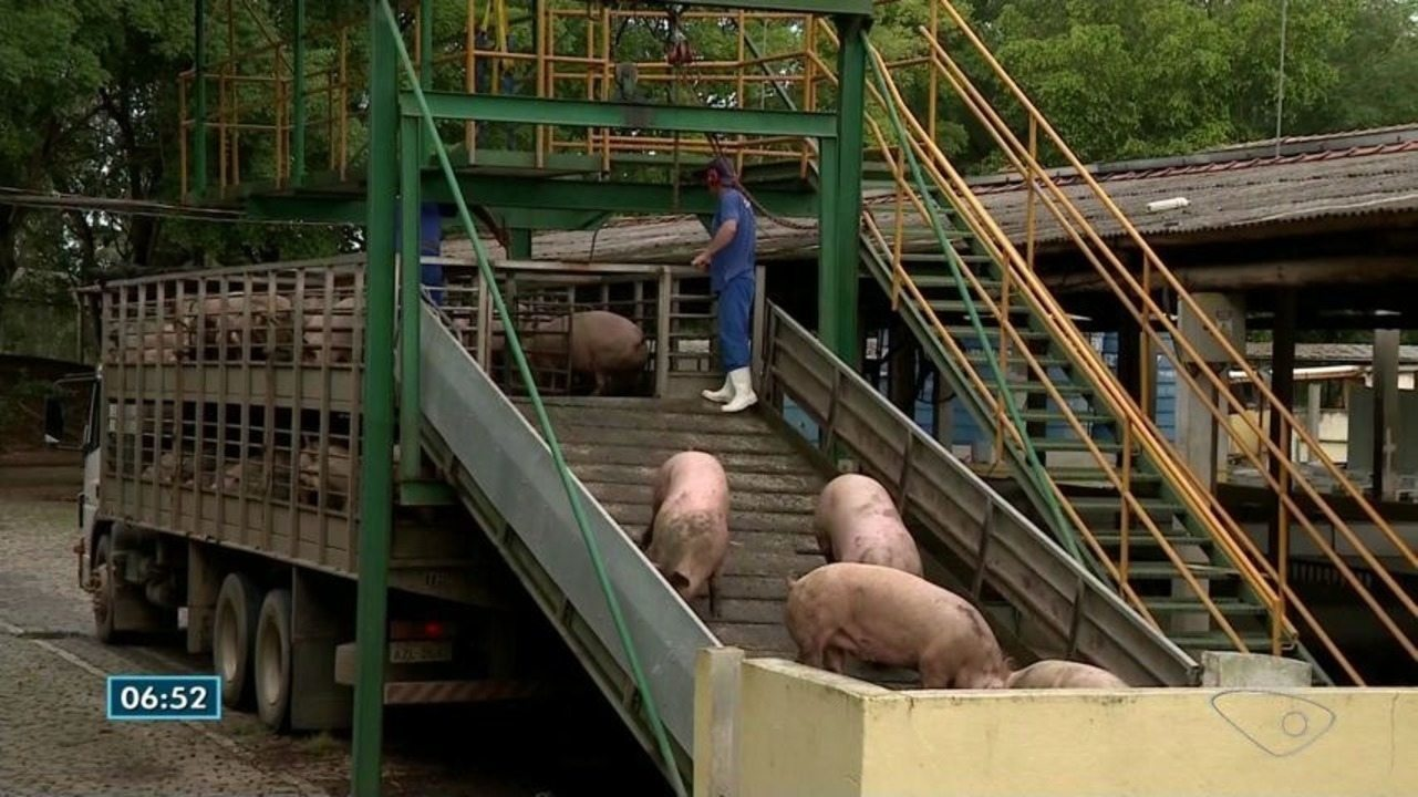 Empresa de abate e beneficiamento de suínos dispensa funcionários no Sul do ES
