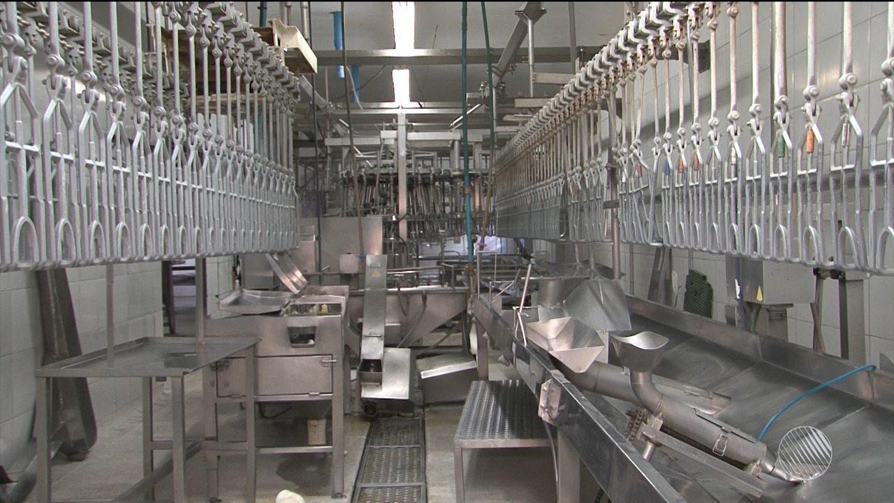 Avícola de Barreiras suspende abate por falta de alternativa para escoar mercadorias