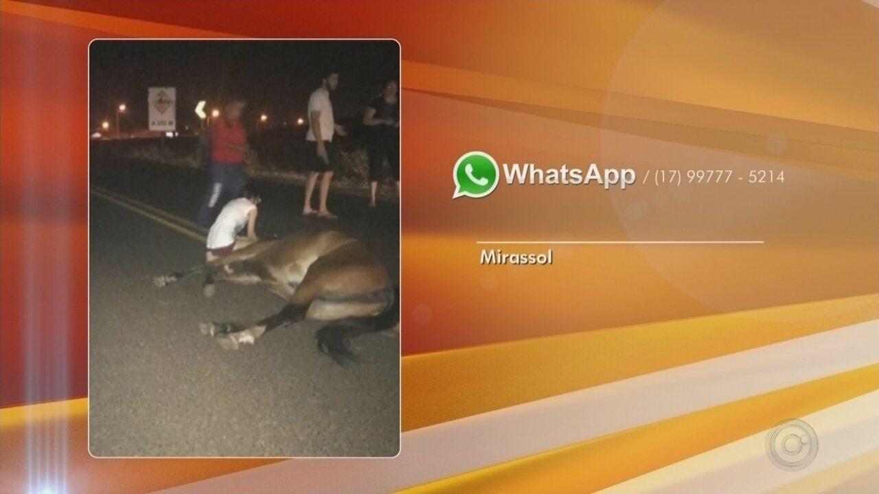 Cavalo solto na pista provoca acidente em rodovia de Mirassol