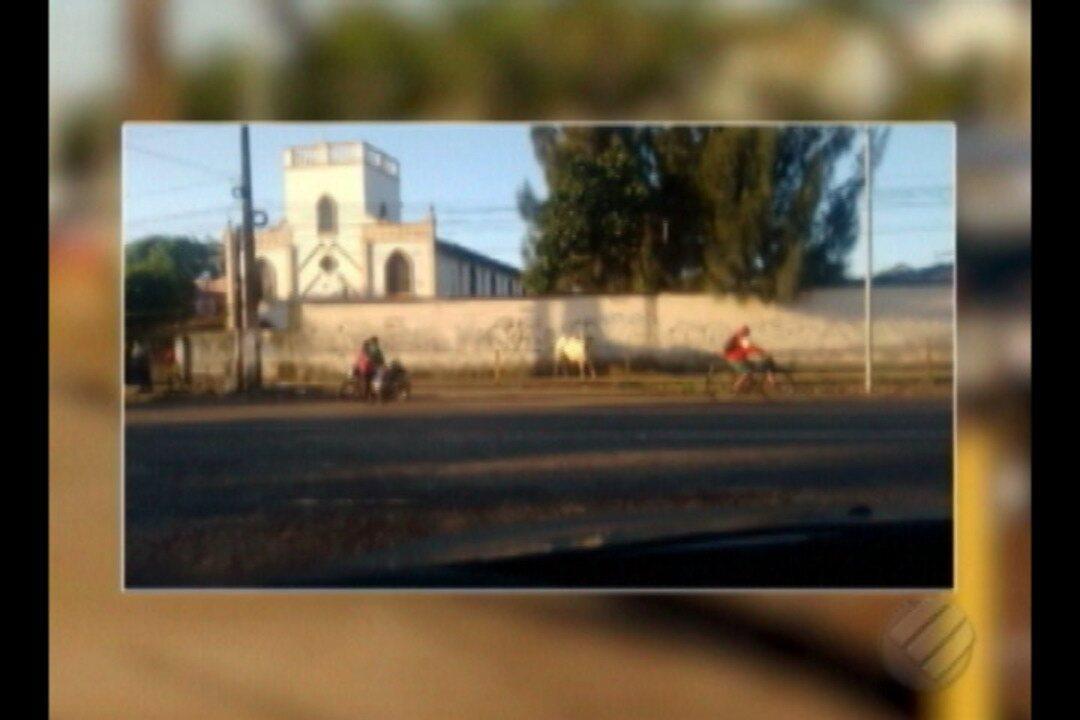 Bois caem de caminhão e atacam pessoas às margens da BR-316 no Pará