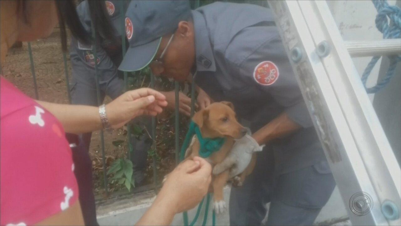 Cachorra presa em prédio desativado mobiliza Corpo de Bombeiros em Bauru