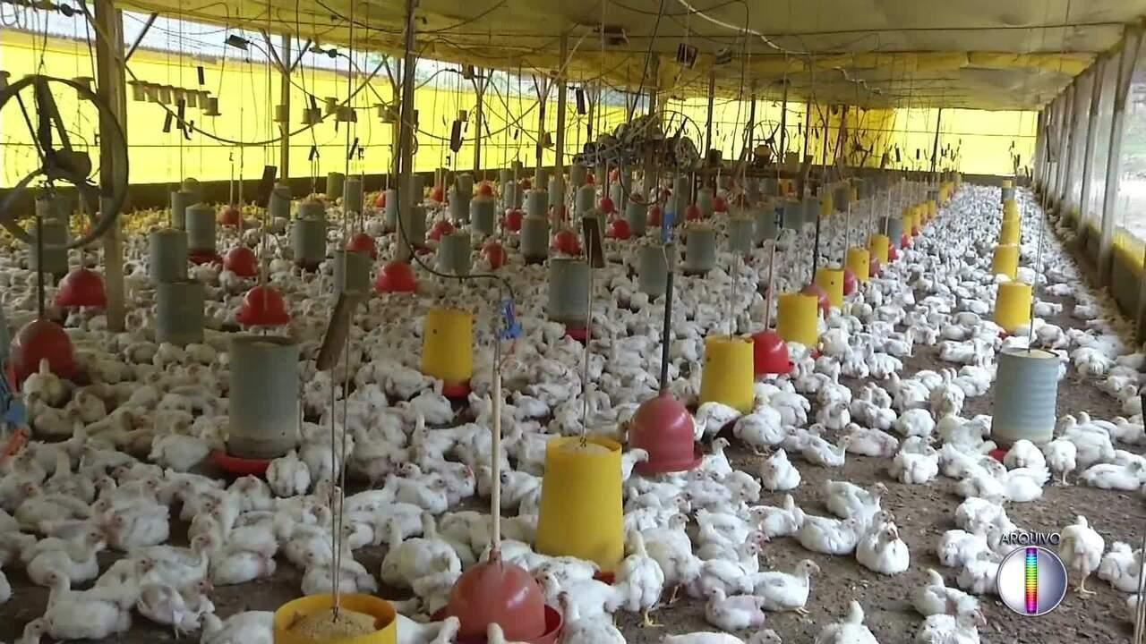 China impõe medidas antidumping sobre importação de frango brasileiro