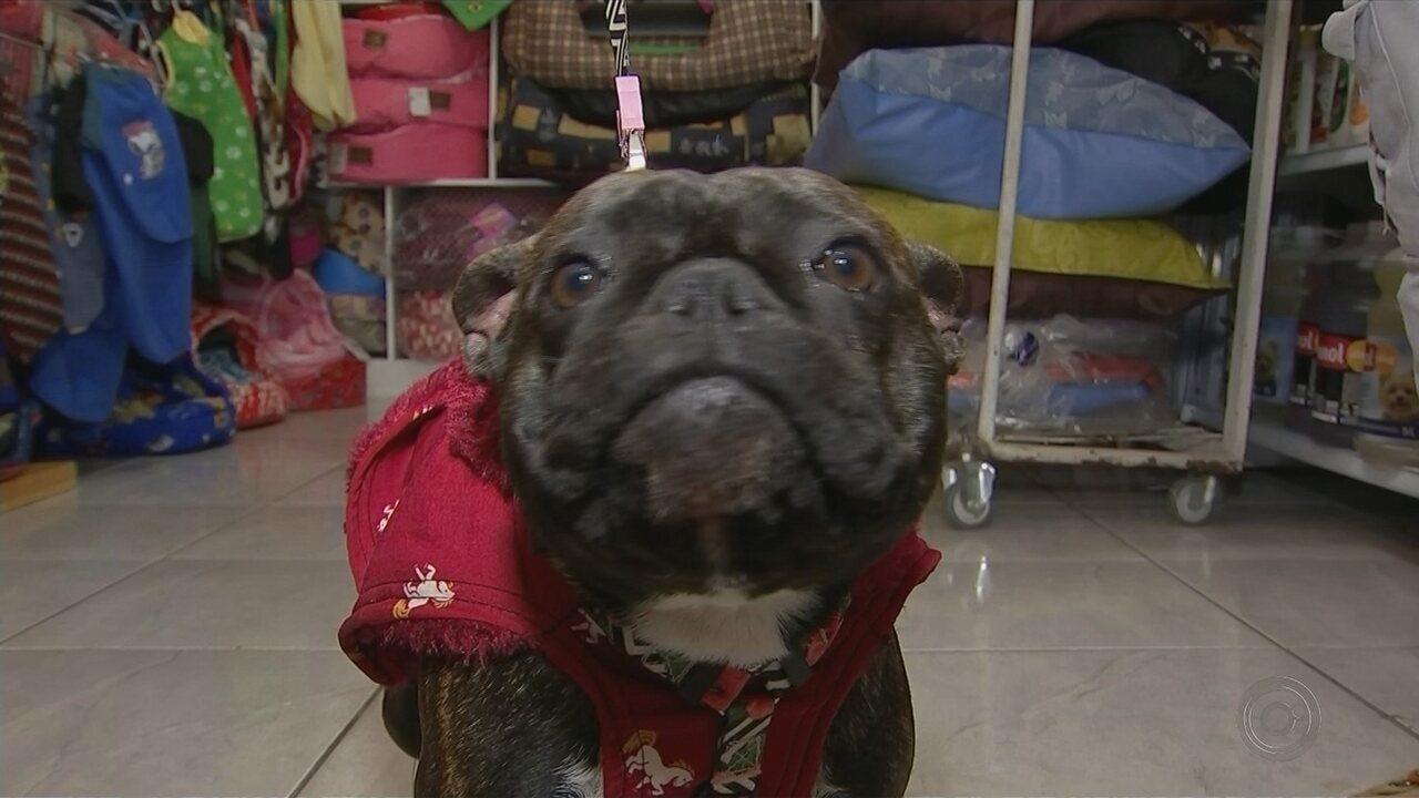Inverno 'aquece' as vendas em pet shops de Itapetininga