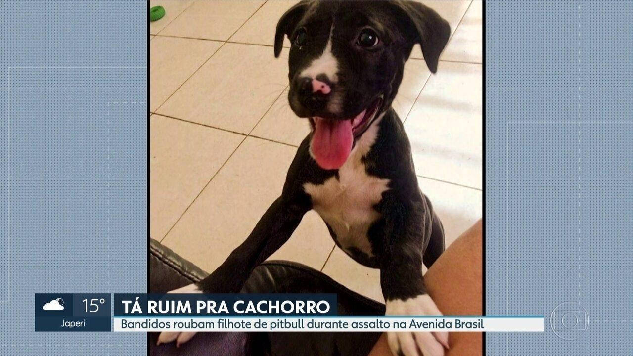 Bandidos roubam cachorro de um casal durante assalto