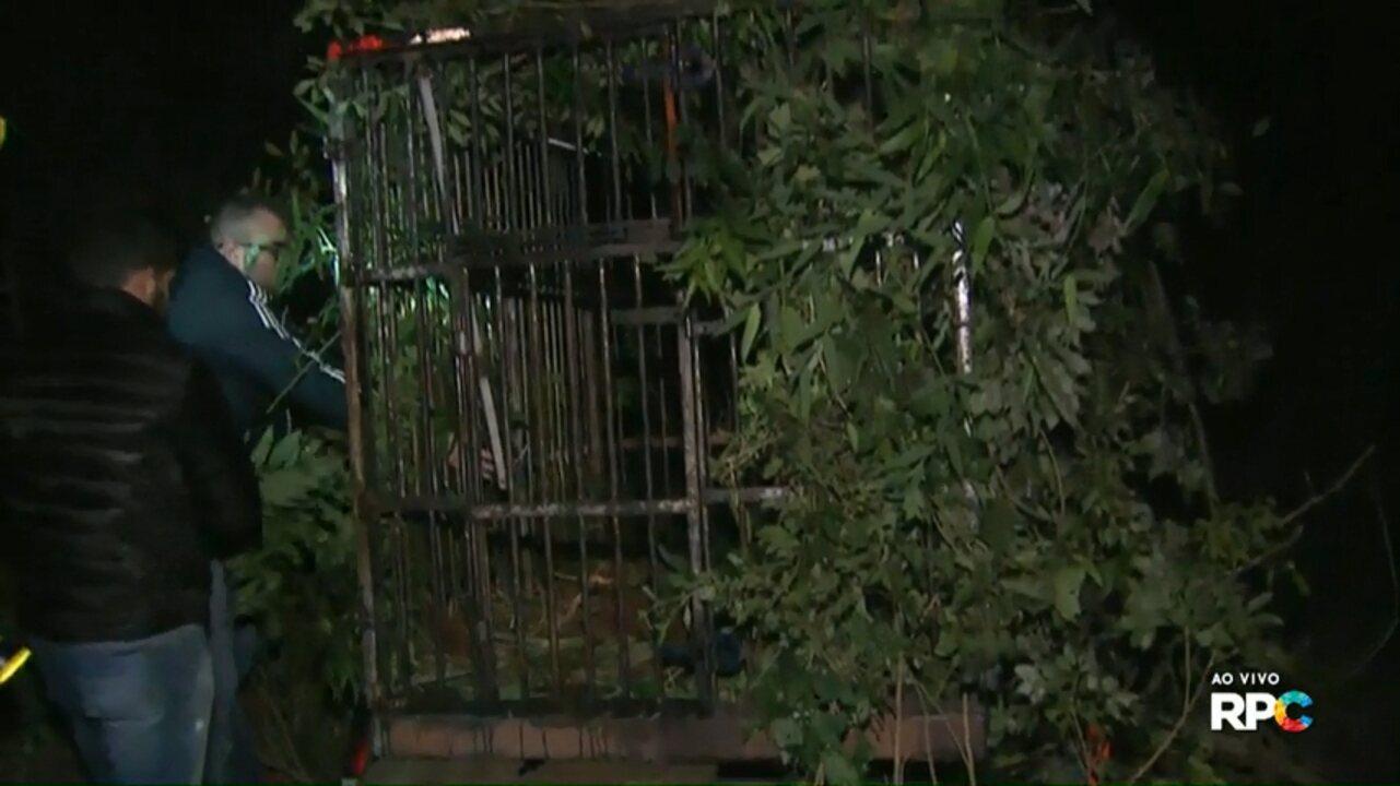 Armadilhas são colocadas no lago de Cascavel para pegar onça que ronda o lugar