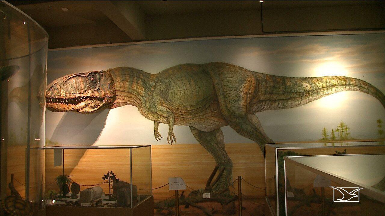 Fósseis de dinossauros são encontrados na zona rural de Coroatá