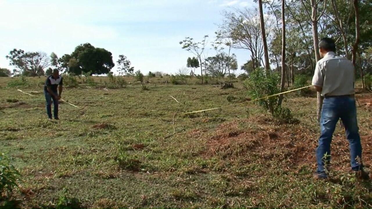 Infestação de formigas preocupa pecuaristas da região noroeste
