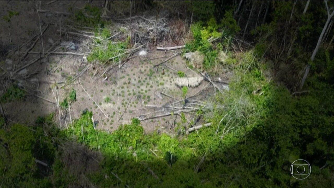 Bom Dia Brasil tem acesso a imagens de aldeia indígena isolada descoberta no Amazonas