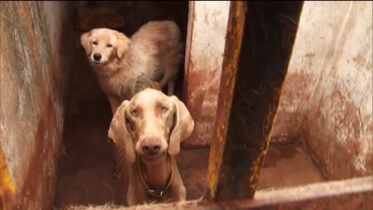 Polícia Ambiental recebe 7 denúncias de maus tratos de animais por dia no DF
