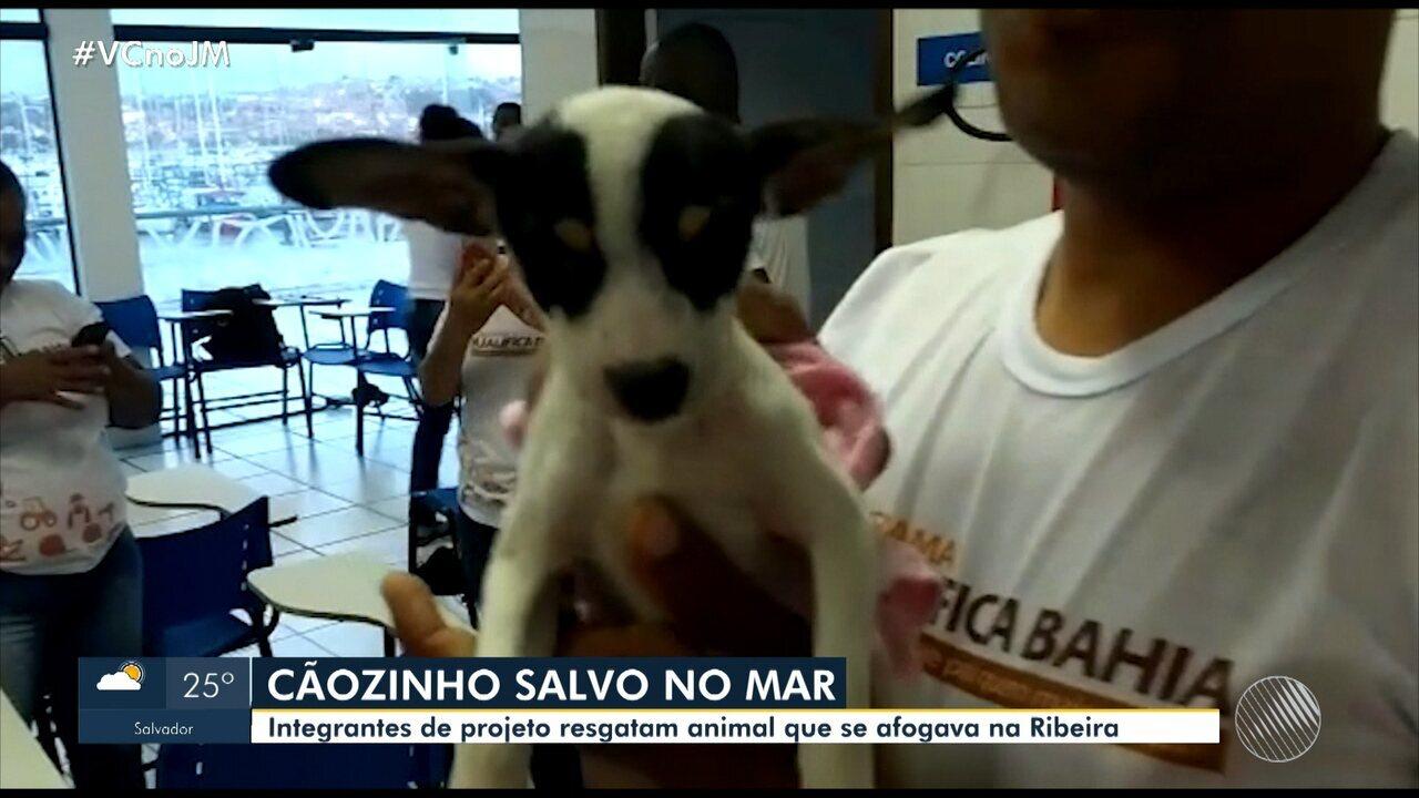 Afogamento: integrantes de projeto resgatam cachorro na Ribeira