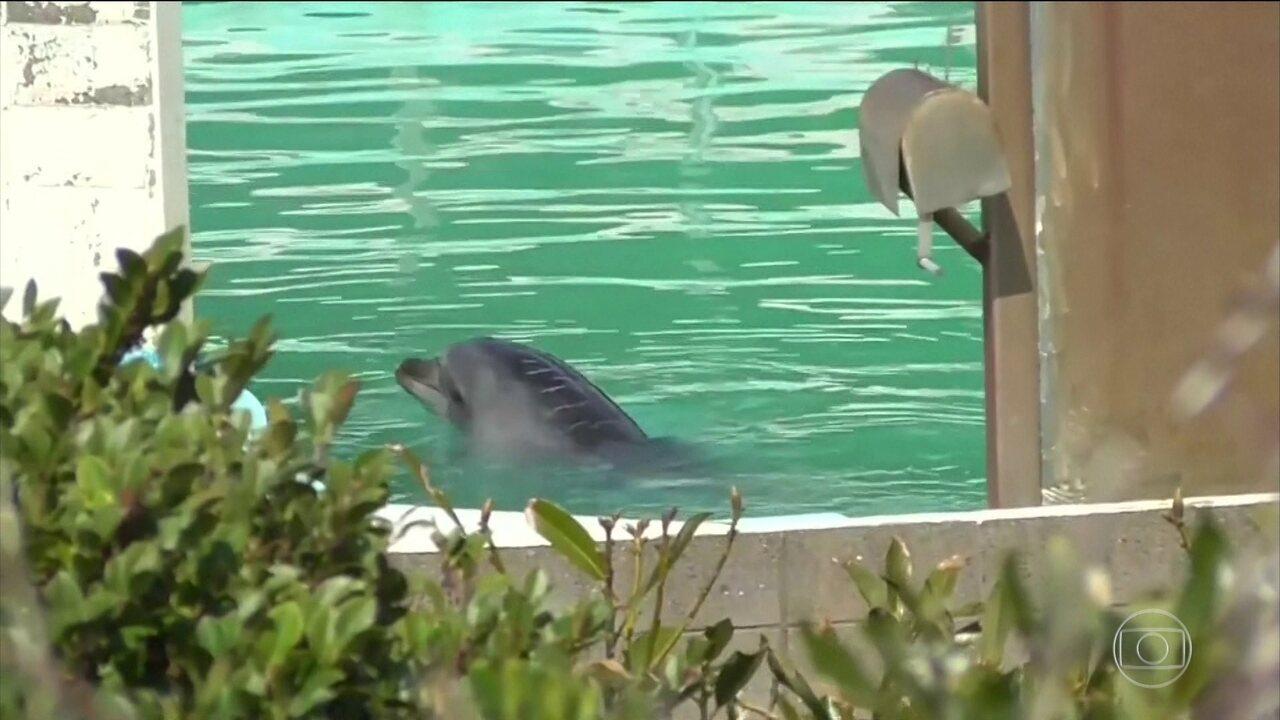 Golfinho abandonado em aquário gera protestos no Japão