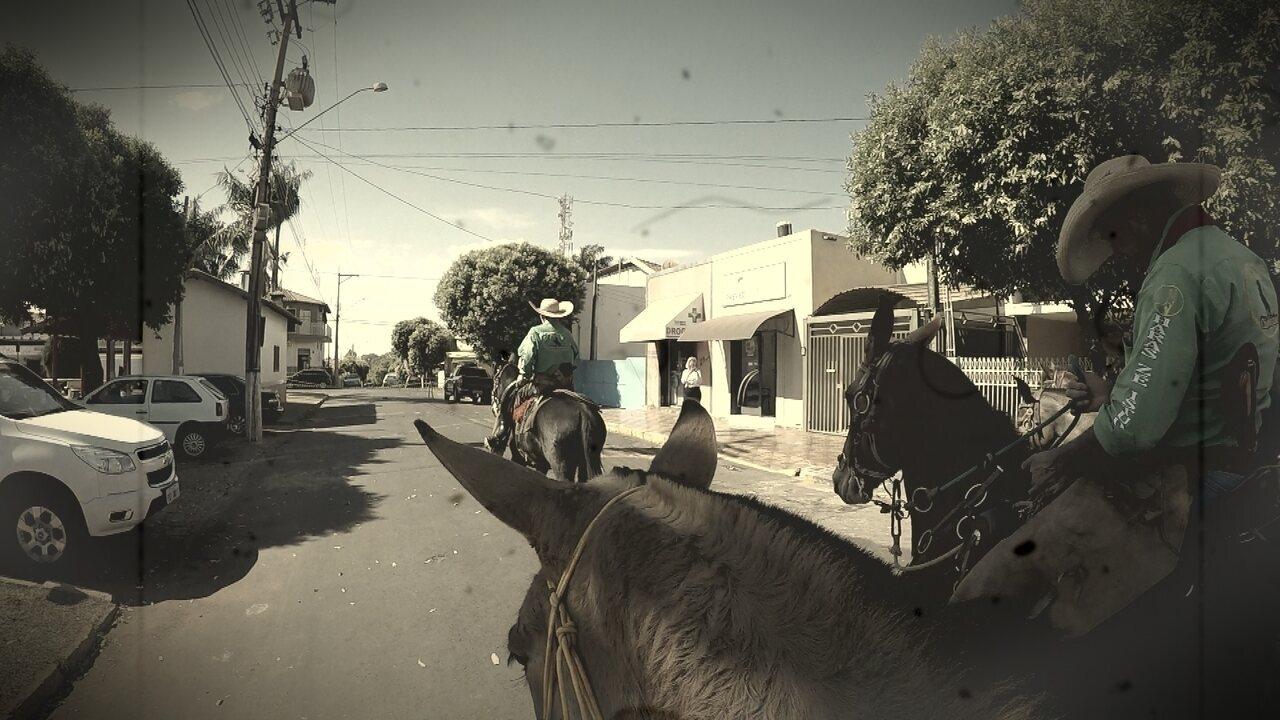 Passeio com mulas e cavalos