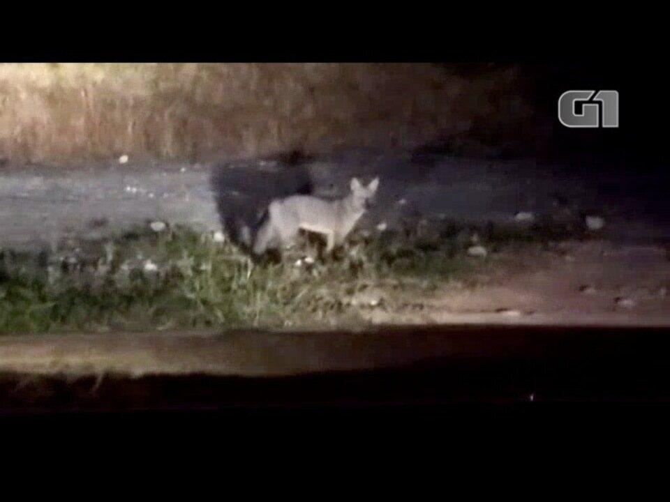 Lobo é flagrado no Parque do Itaim em Taubaté