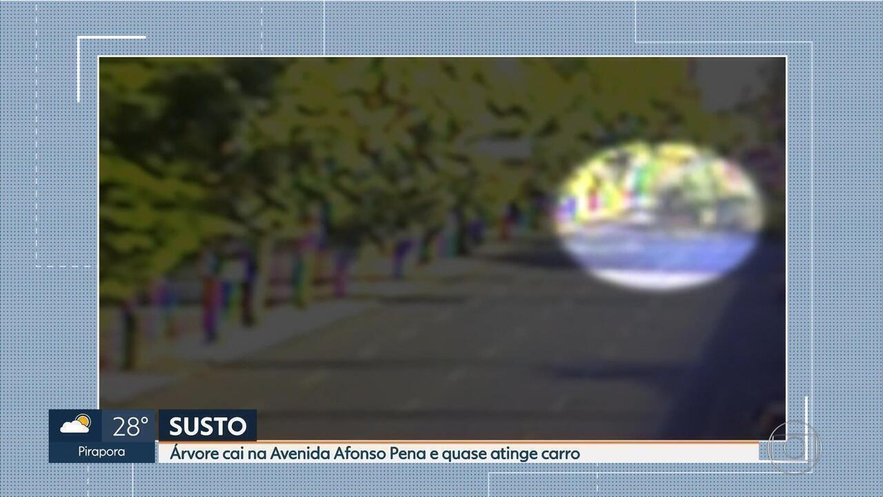 Árvore cai na Avenida Afonso Pena, em BH, e quase atinge carro