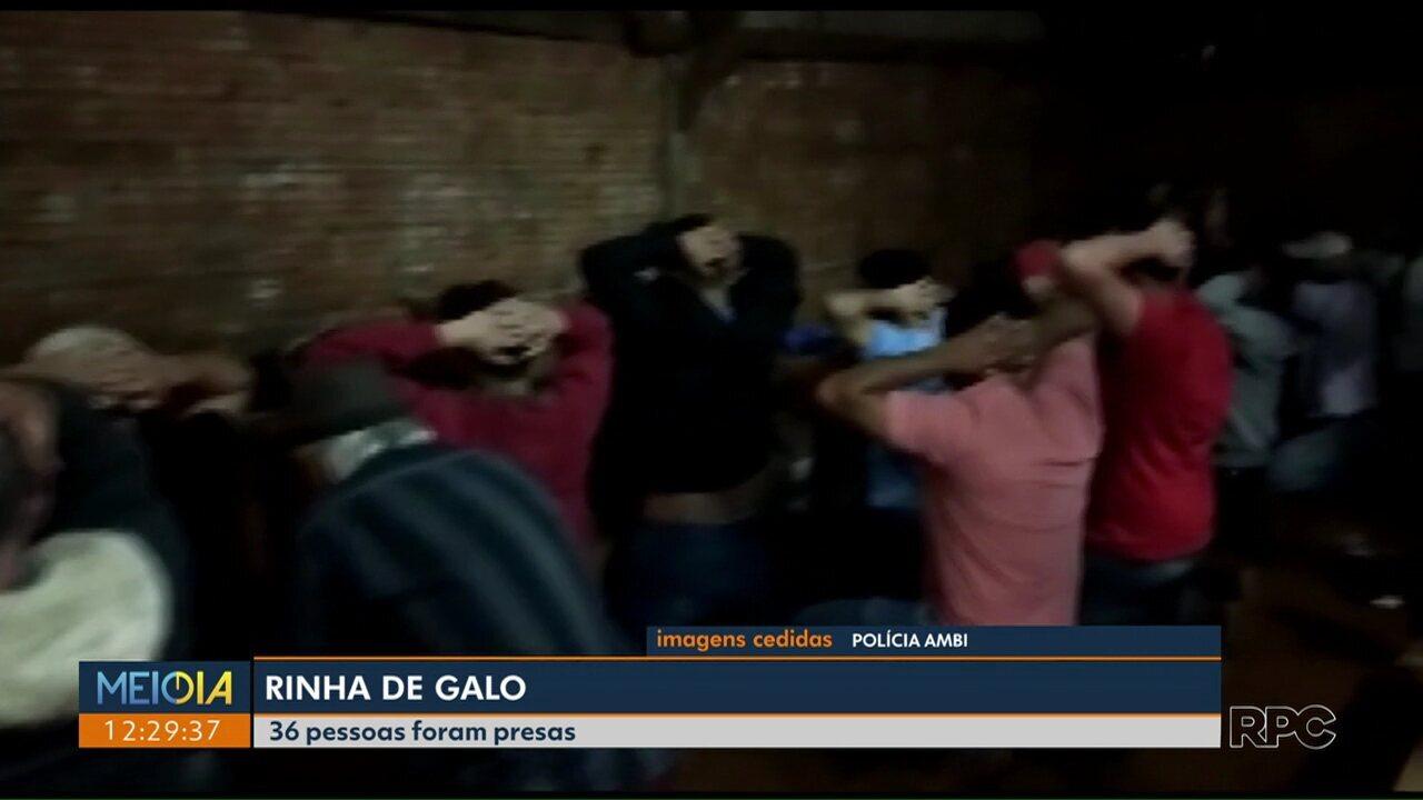 36 pessoas são presas em Rinha de Galo