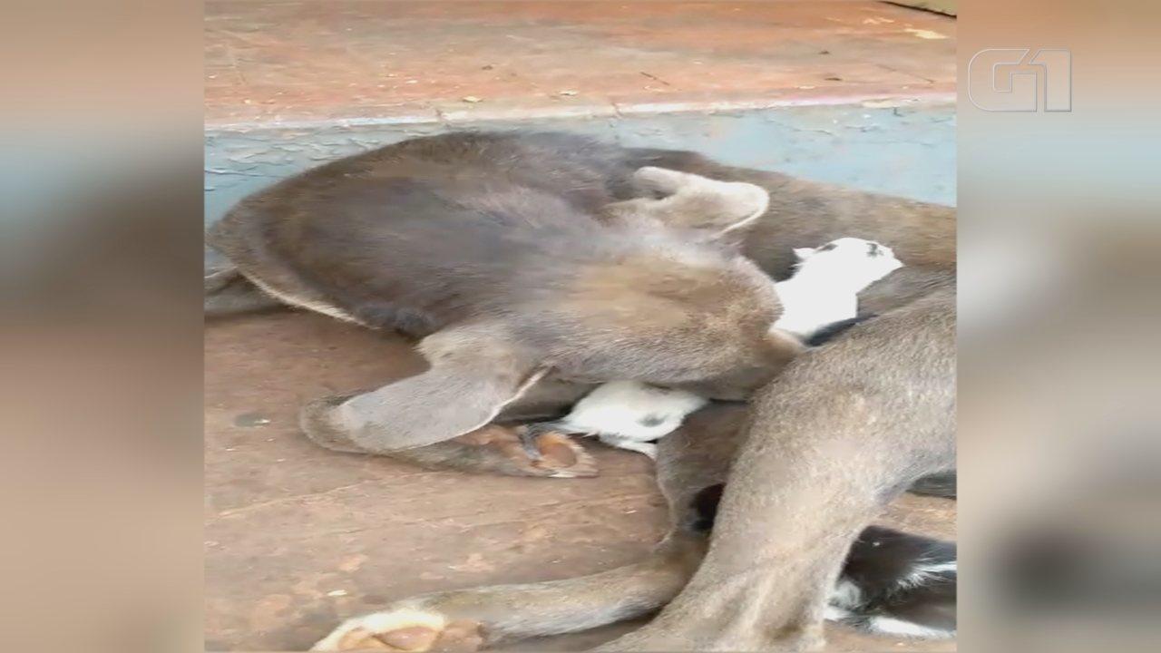 Cachorra 'adota' filhotes de gato abandonados em cemitério de Bocaina