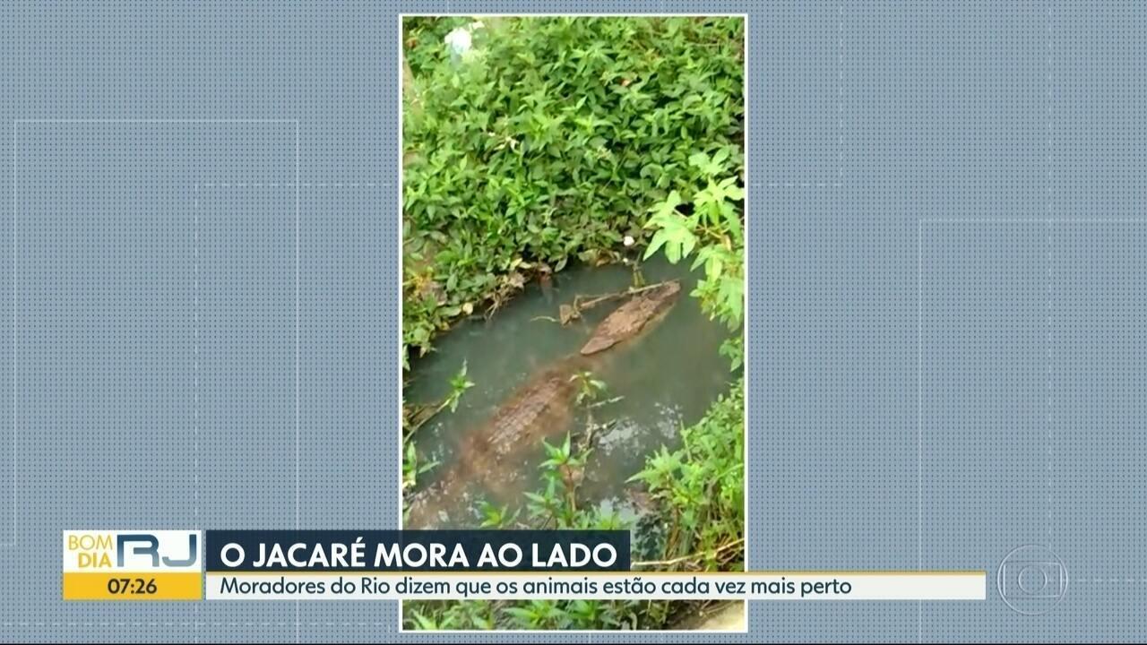 Jacarés aparecem em vários pontos do Rio