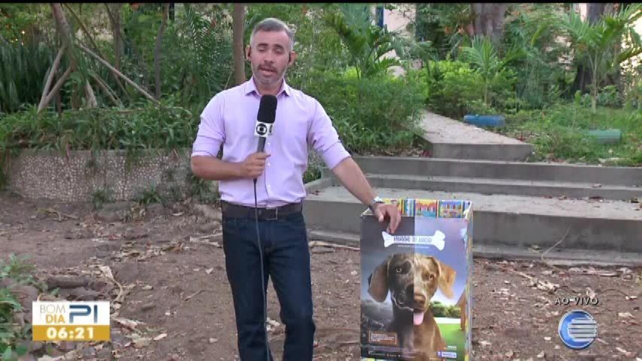 Campanha de arrecadação de ração para cães e gatos tem 22 pontos de coleta em Teresina