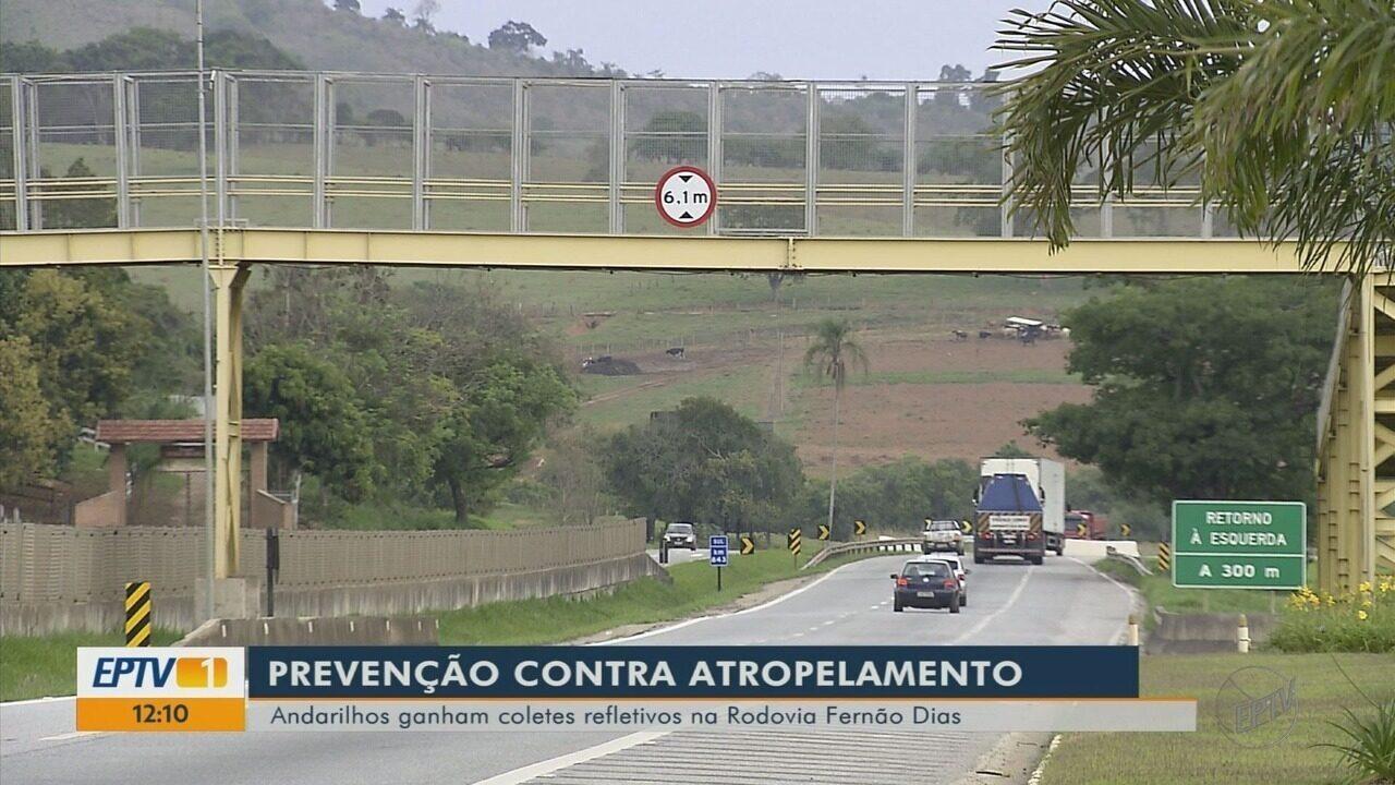 Fernão Dias já registra 23 atropelamentos, com sete mortes, em 2018