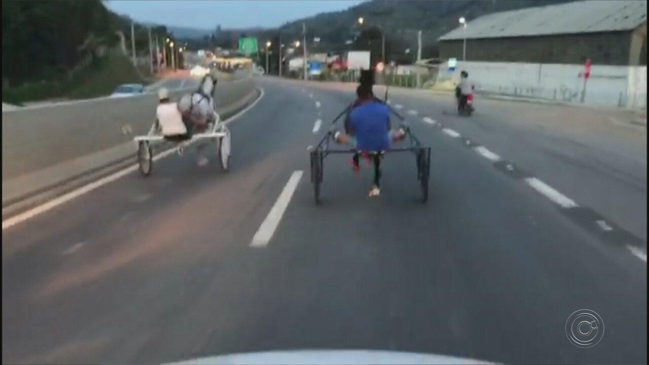 Cavalo cai durante racha entre charretes em rodovia no interior de SP