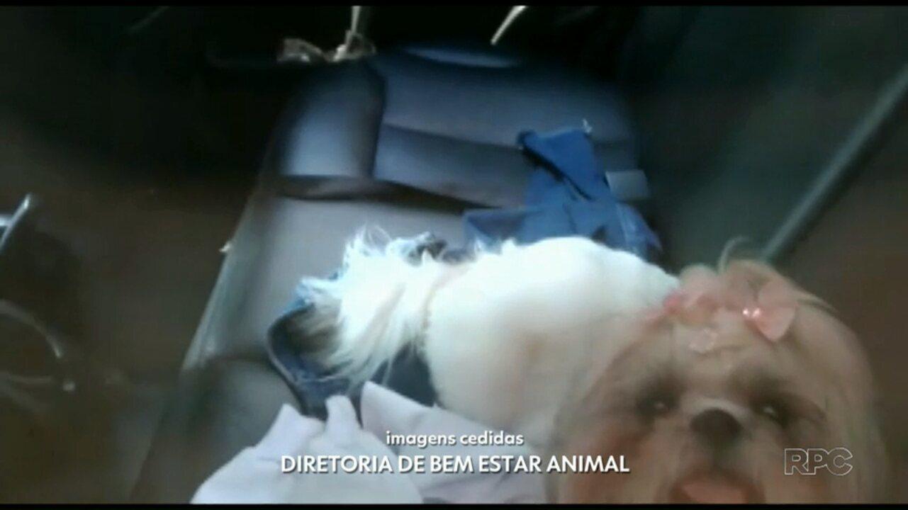Cachorro fica preso dentro de carro