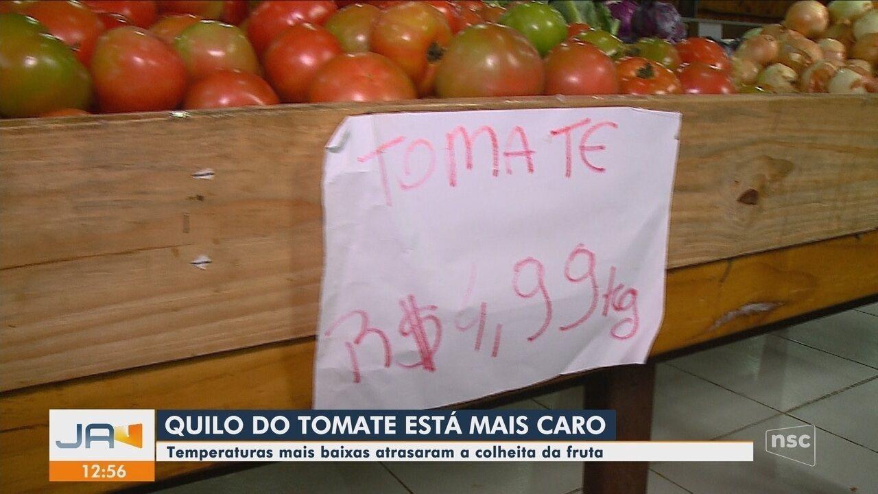 Baixa temperatura afeta produção de tomate, e preço sobe nos mercados de SC