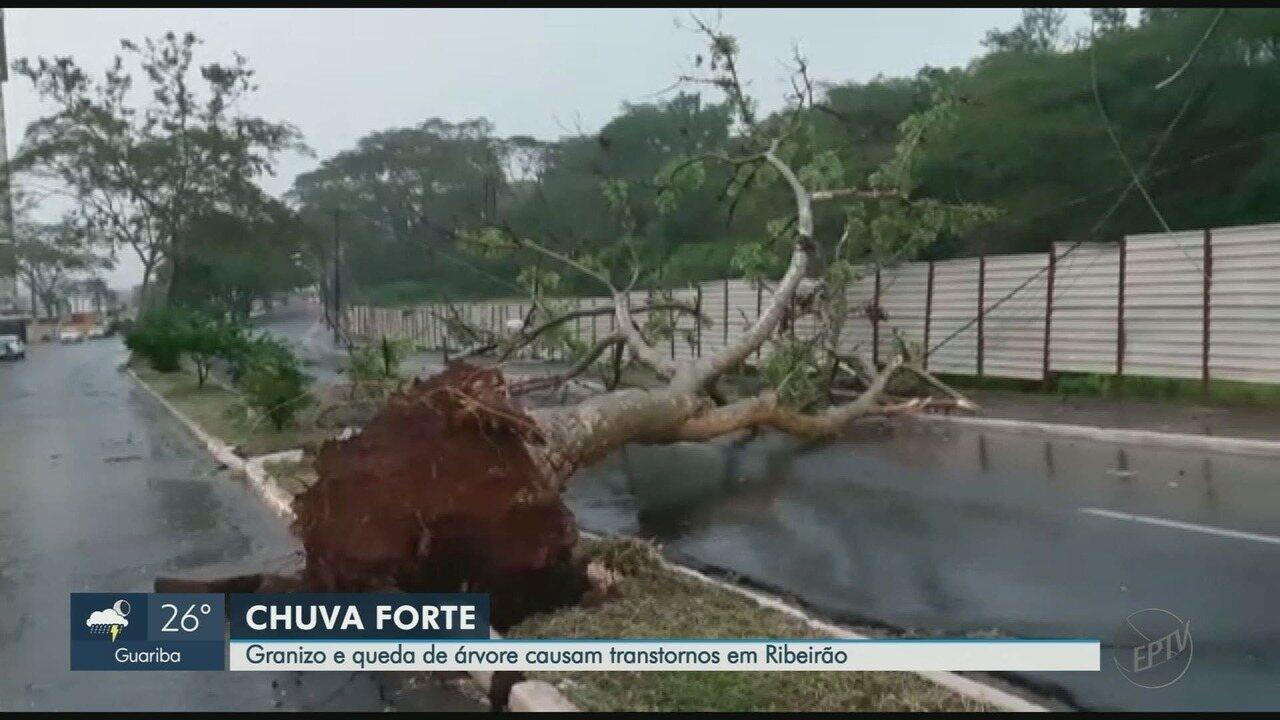 Granizo e queda de árvore causam transtornos em Ribeirão Preto