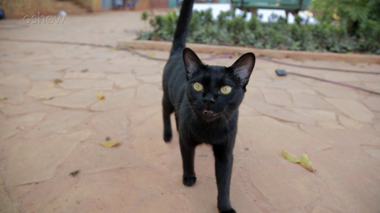 Veja como são feitas as gravações com o gato de 'O Sétimo Guardião'