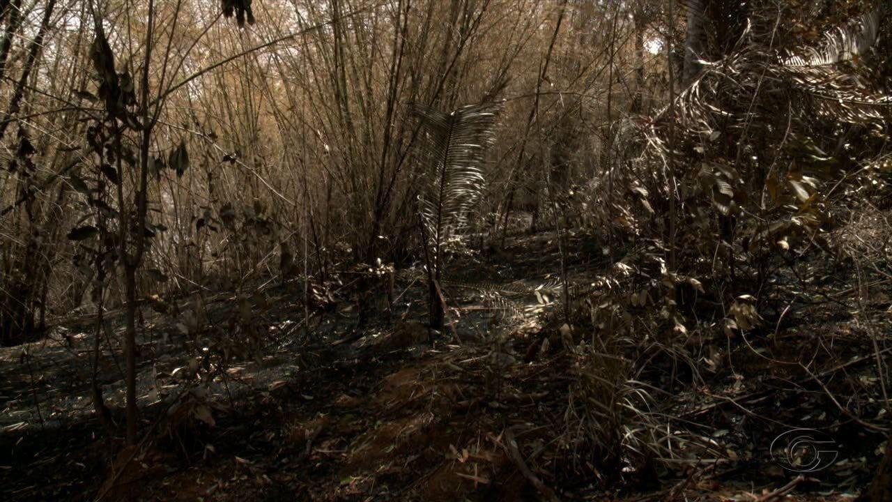 Mais um incêndio atinge Área de Proteção Ambiental em Murici
