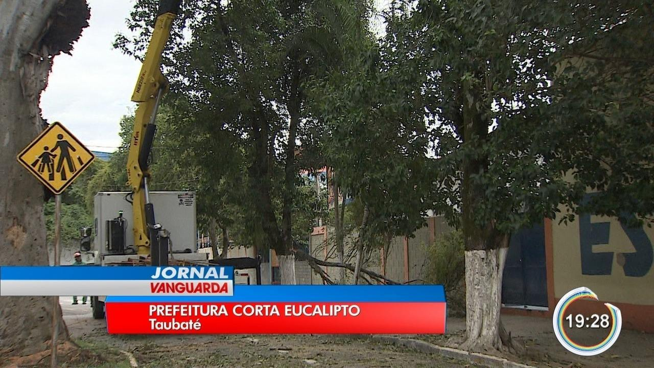 Prefeitura de Taubaté faz corte em árvore de 30 metros