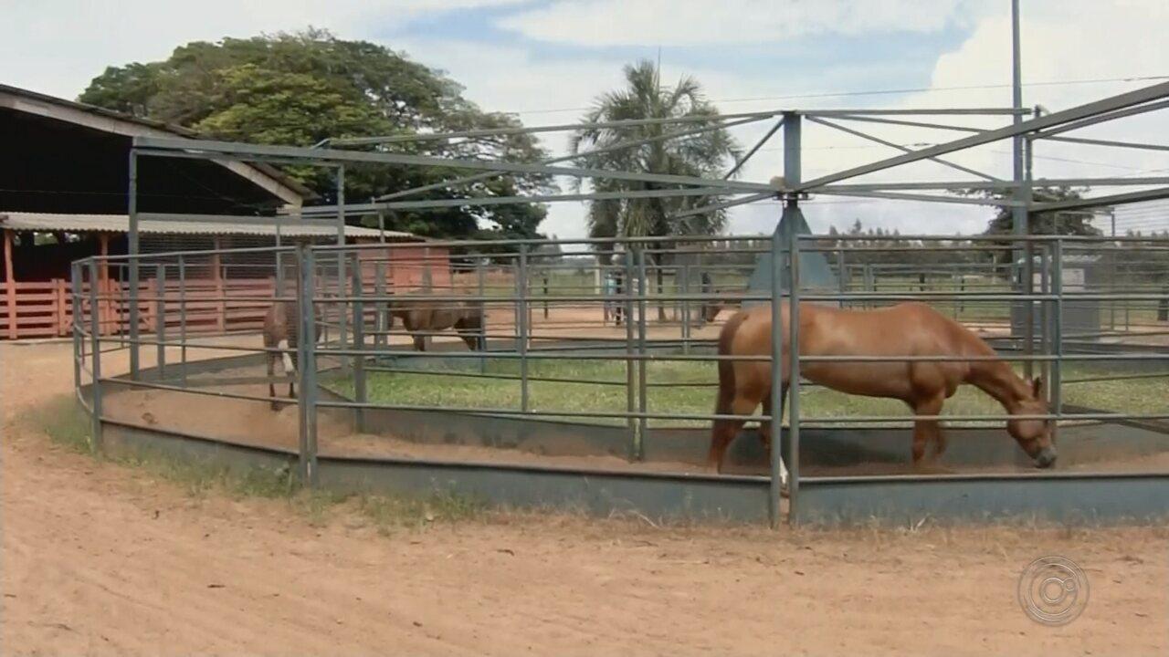 Recinto de exposições de Araçatuba ganha investimento para eventos equestres