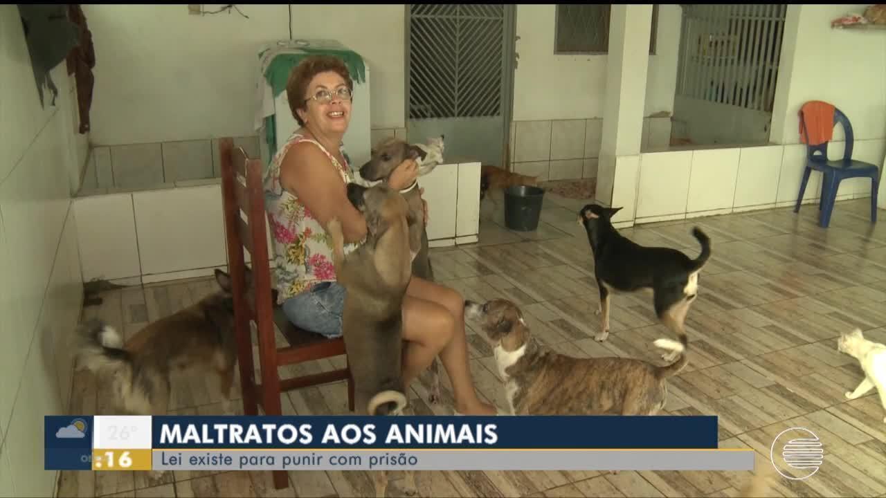 Maus-tratos aos animais: lei existe para punir com precisão