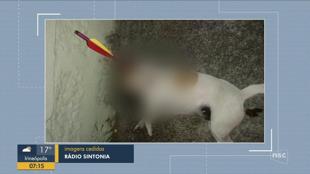Cachorro morre após levar flechada em Ituporanga